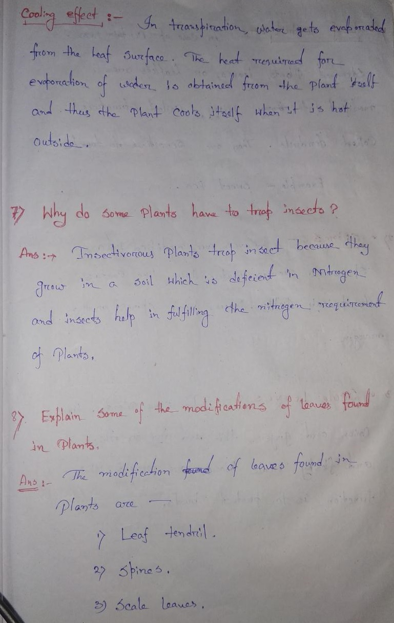 Selina Concise Class 6 Biology Chapter 1 The Leaf Solution
